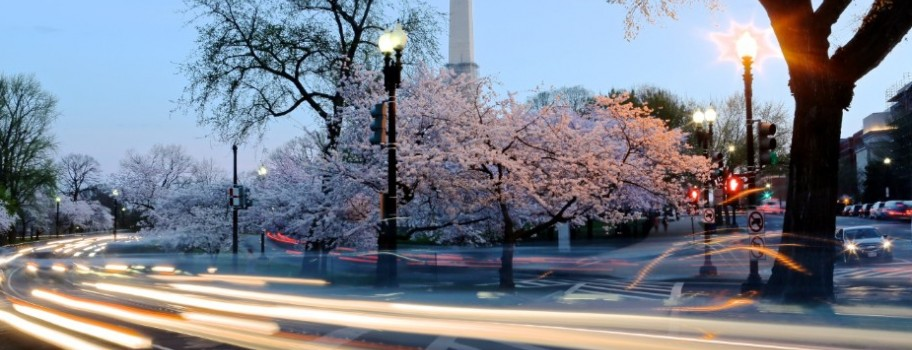 Winter Blues To Turn Pink With D.C.'s Cherry Blossom Season Image