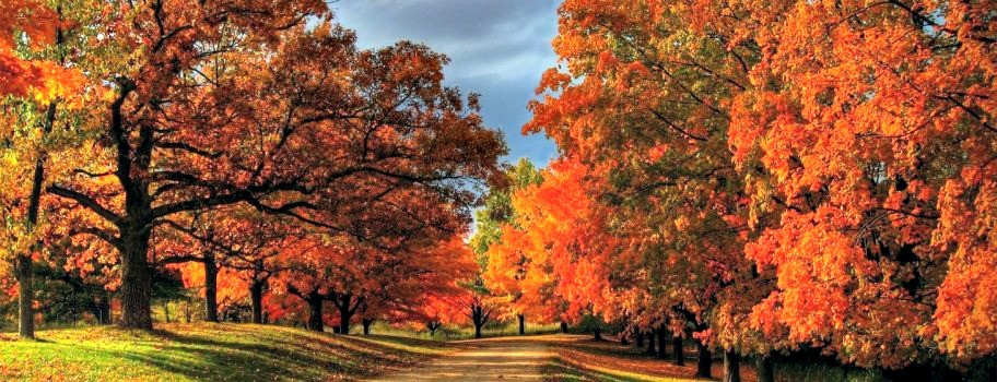 Are You a Leaf Peeper? Image